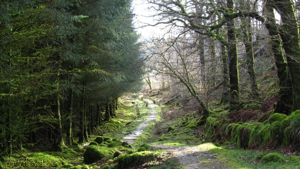 Las w Kilmartin Glen