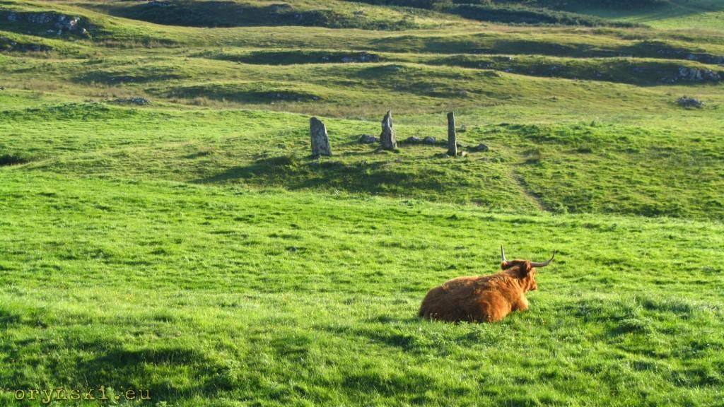 Krąg kamienny w pobliżu zamku Glengorm