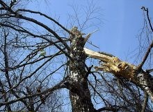 1200px-tree_of_polish_air_force_tu-154_crash_mak_report